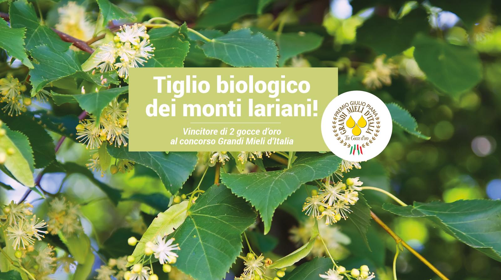 Agape Azienda Agricola Miele Biologico Como Monti Lariani Goccia Oro
